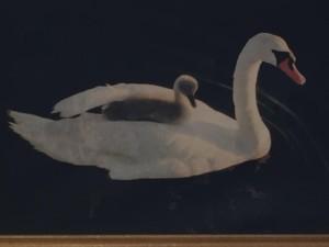 Swan moms